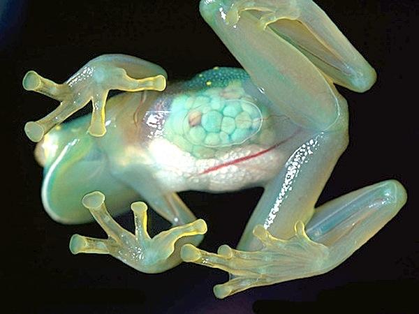 600tumblr-transparent-frog