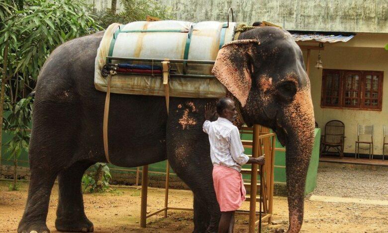 ◄|شاهد| لحظة مفجعة.. فيل يودع مدربه بعد وفاته بـ السرطان