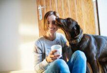 ممنوع تقبيل الكلاب.. لها تأثير على صحتك وتصاب بأمراض خطيرة