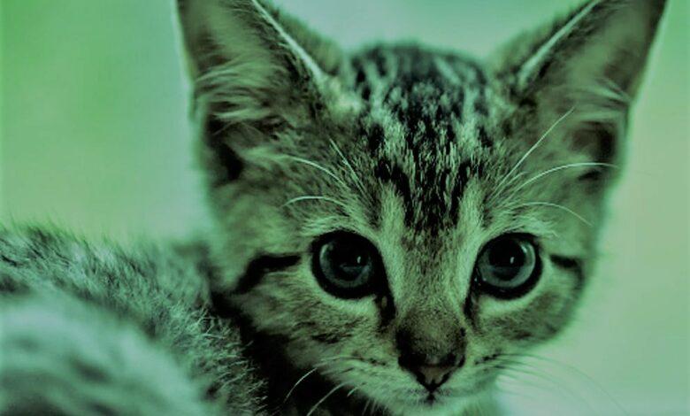 «تقفز في الهواء بمجرد رؤيته» لماذا تخاف القطط من الخيار؟! (فيديو)