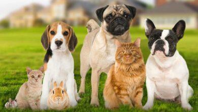 إذا كان حيوانك الأليف يعاني من مشاكل بسبب حرارة الصيف.. إليك 6 حلول منزلية
