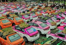 شركة تزرع أسقف سياراتها