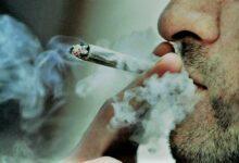تدخين الحشيش يضاعف خطر الإصابة بالأزمات القلبية.. دراسة توضح