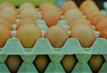 ارتفاع سعر كرتونة البيض