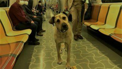 كلب يركب وسائل النقل العام