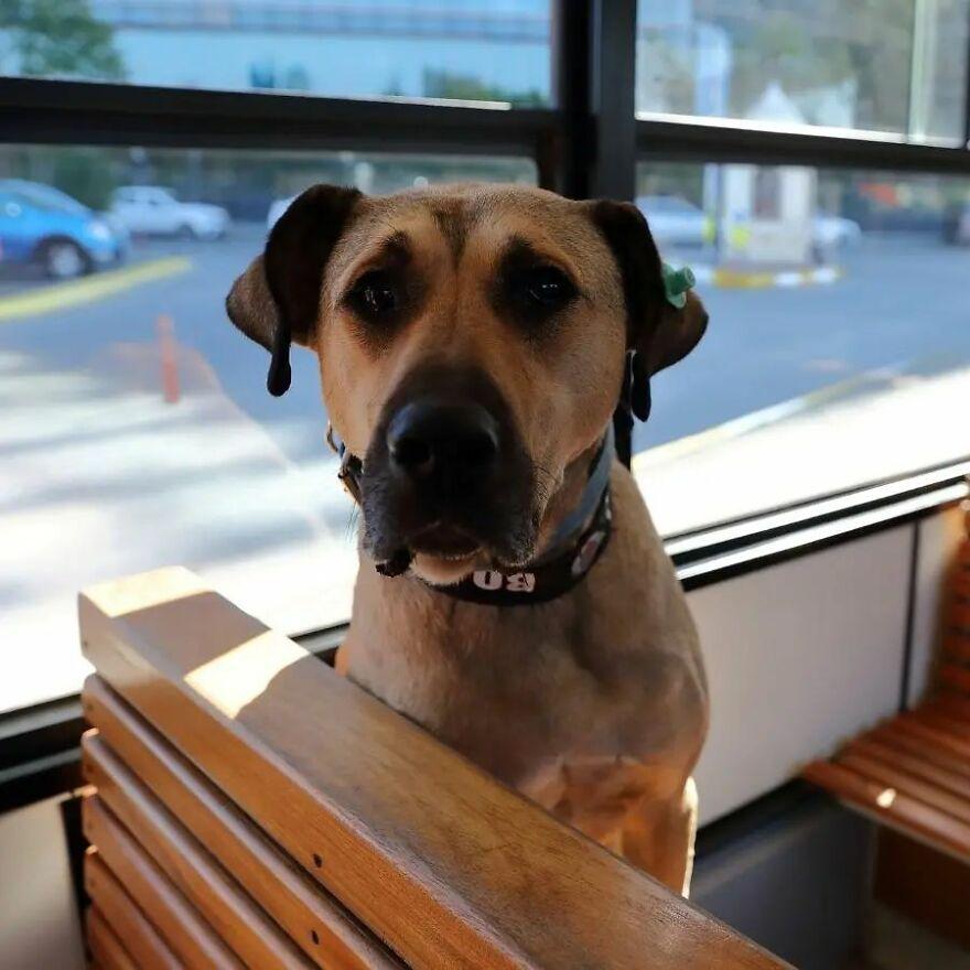 كلب يركب وسائل النقل العام 3
